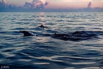 海豚湾免费在线观看