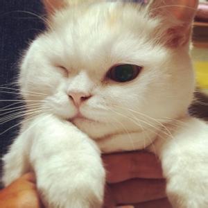 微信猫咪头像图片大全搞笑_微信猫咪图片大全