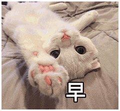 表情猫的图片大全可爱 搞笑
