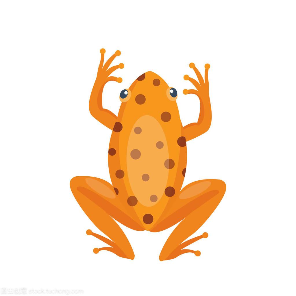 青蛙搞笑卡通热带棕色动物卡通自然图标和孤立