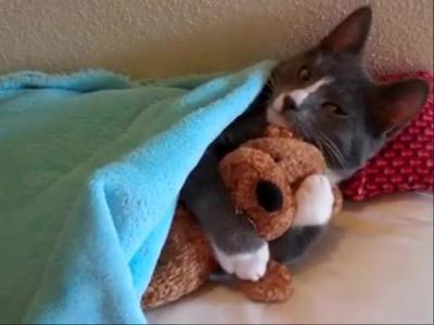 动物搞笑图片大全可爱_动物睡觉的搞笑图片带