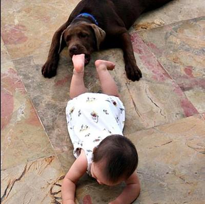 爆笑:宝宝与动物互咬照 超萌