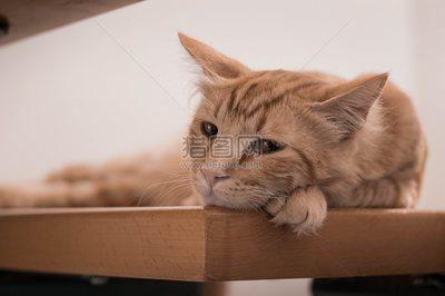 猫美可爱动物白图卡通文本旗帜设计搞笑快乐素