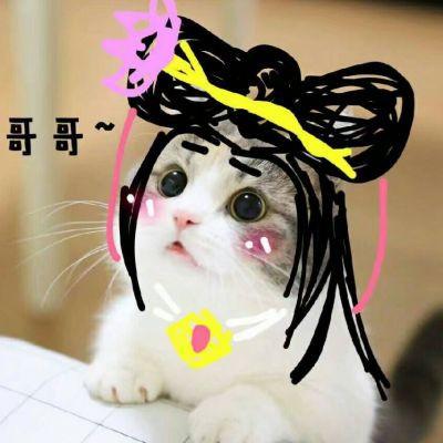 可爱猫咪带字头像搞笑
