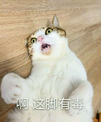 可爱逗逼萌猫小动物头像 最新流行微信表情包
