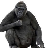 微信动物头像适合男生用的_微信头像图片大全