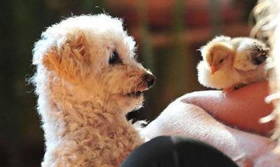 可爱!动物们搞笑有奇招图片_互动图片