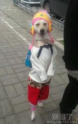 动物图片精选笑话_搞笑动物图片精选精选_爆