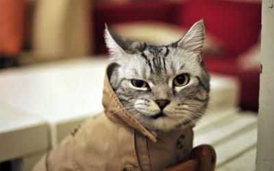 可爱小猫搞笑动物图片宽屏壁纸