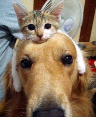 图片动物加名字大全搞笑
